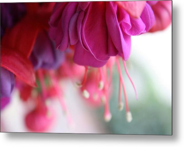 Fuschia Metal Print by Maria Schaefers