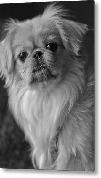 Metal Print featuring the photograph Fuzzface by Kristi Swift