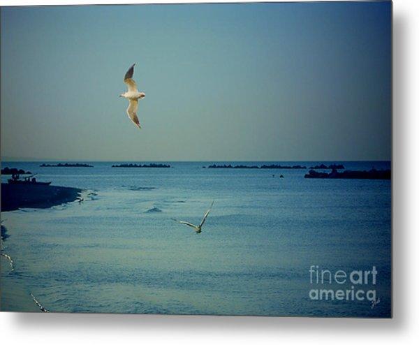 Gabbiani - Seagulls Metal Print