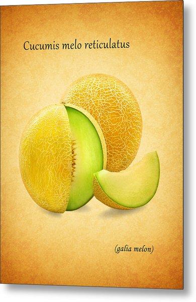 Galia Melon Metal Print