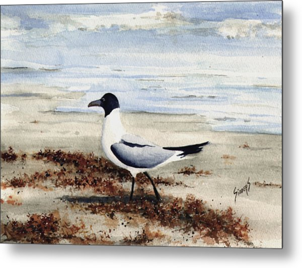 Galveston Gull Metal Print
