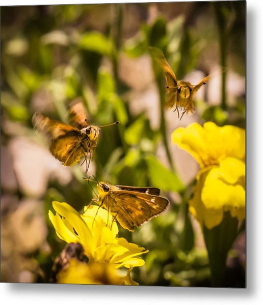 Garden Fairies Strike A Vogue Pose Metal Print