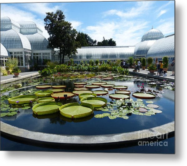 Pond Of Lilies Metal Print