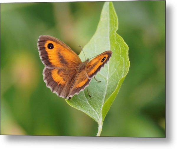 Gatekeeper Butterfly-02 Metal Print
