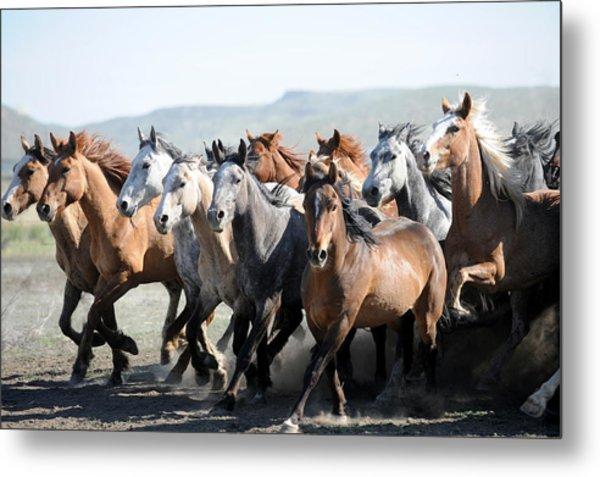 Gathering Horses Metal Print by Lee Raine