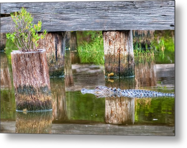 Gator At The Old Trestle Metal Print