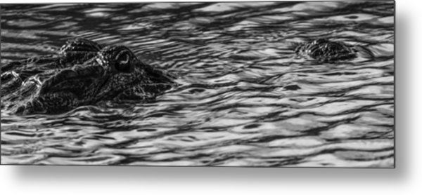 Gator Country Metal Print