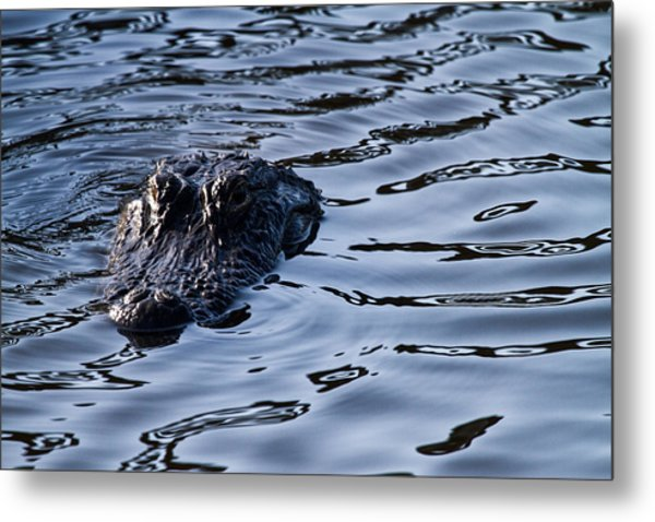 Gator On The Hunt Metal Print
