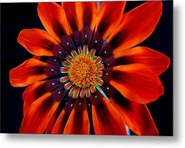 Gazania Flower Metal Print by Larry Harper