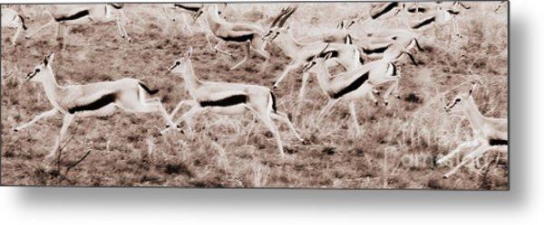 Gazelles Running Metal Print