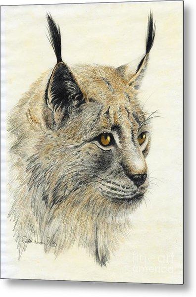 Gazing Lynx Metal Print