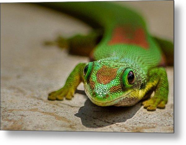 Gecko Portrait Metal Print