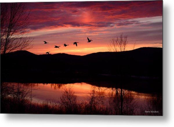 Geese After Sunset Metal Print