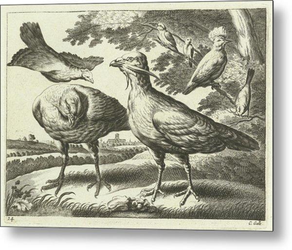 Geese And A Cockatoo, Pieter Van Lisebetten Metal Print