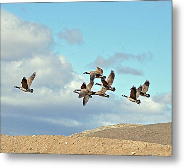 Geese In Flight Metal Print