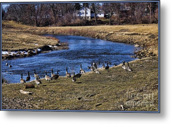 Geese On The Creek Metal Print