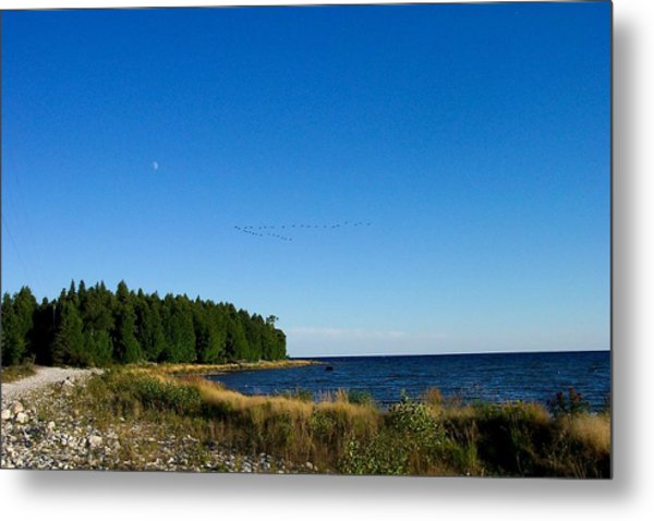 Geese Over Cana Island Metal Print by Pamela Schreckengost