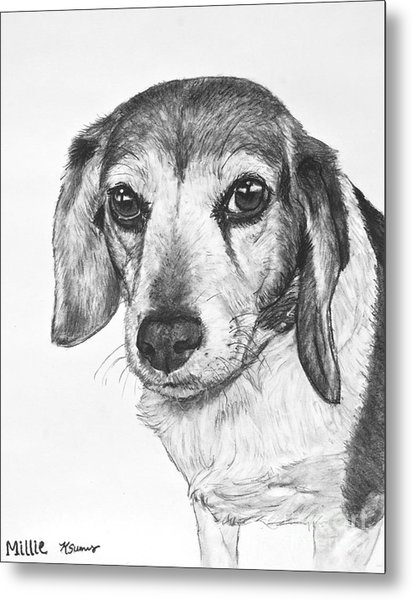 Gentle Beagle Metal Print