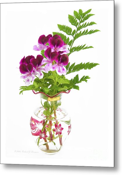 Geranium 'witchwood' Metal Print