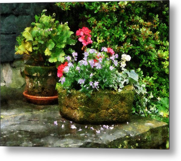Geraniums And Lavender Flowers On Stone Steps Metal Print by Susan Savad