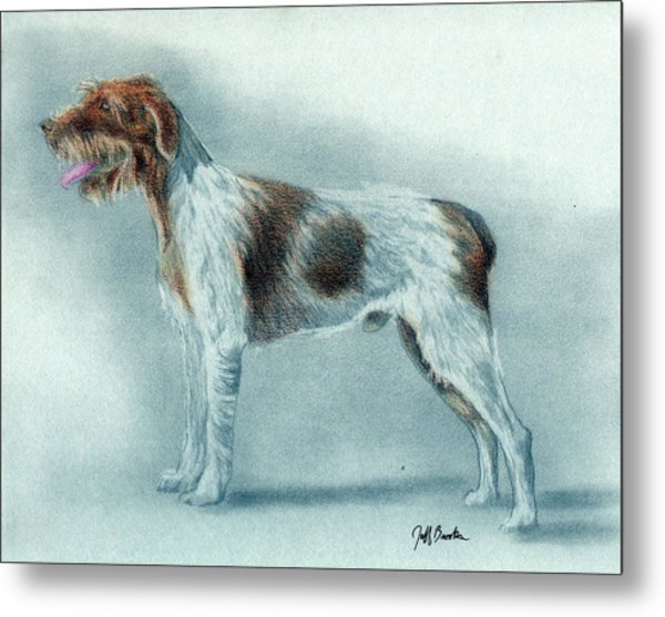 German Wirehaired Pointer Metal Prints and German Wirehaired Pointer ...