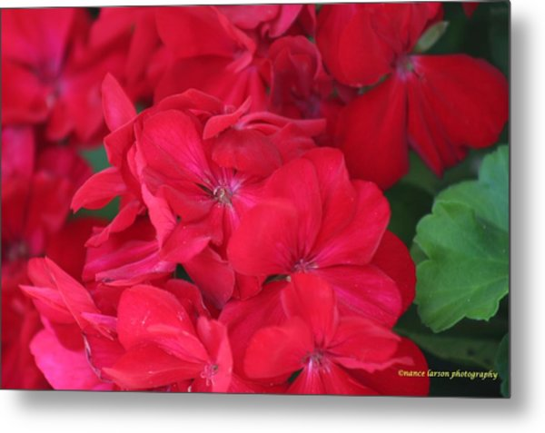 Germaniums Metal Print