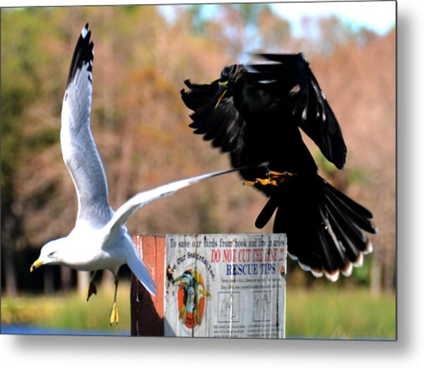 Get Off Metal Print by Julie Cameron