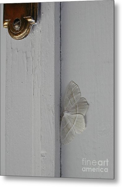 Ghost Doorbell Moth Metal Print