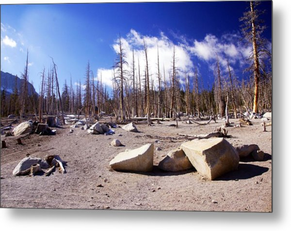 Ghost Forest 3 Metal Print by Michael Courtney