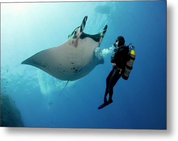 Giant Manta Ray With A Scuba Diver Metal Print by Gerard Soury