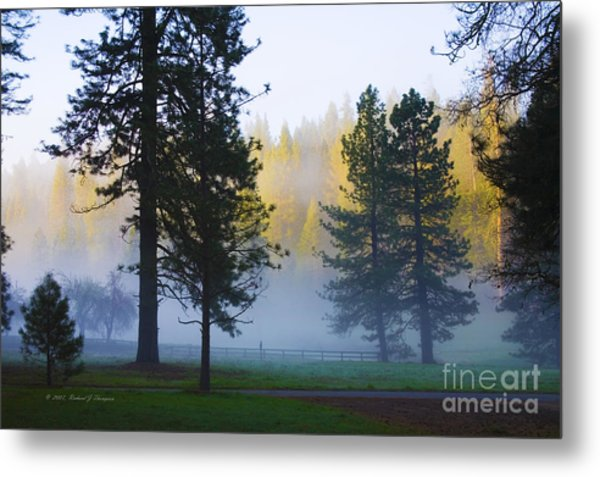 Giant Sequoias Metal Print