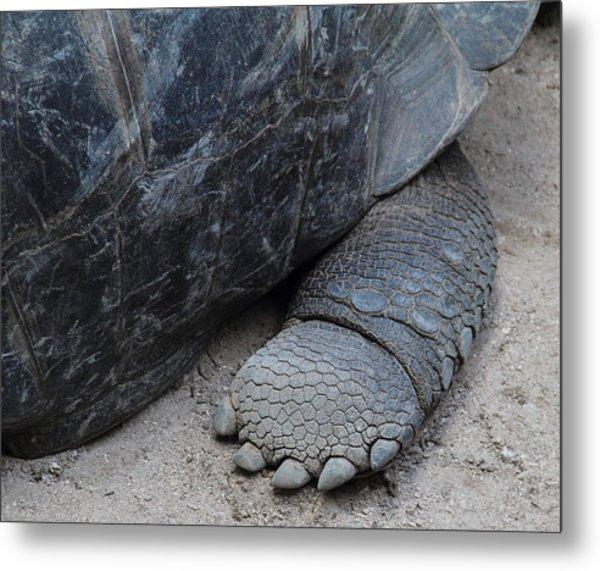 Giant Tortoise Metal Print by Debbie Cundy
