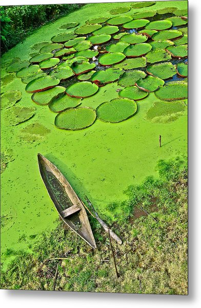 Giant Water Lilies And A Dugout Canoe In Amazon Jungle-peru Metal Print