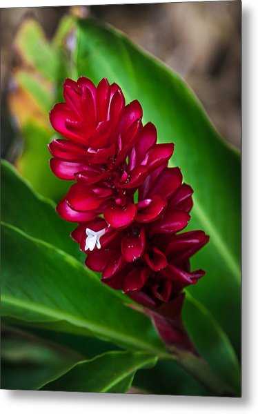 Ginger Flower Metal Print