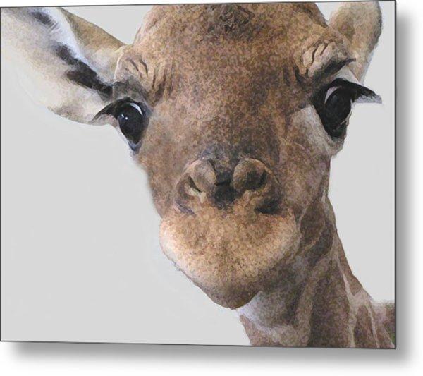 Giraffe Baby Metal Print