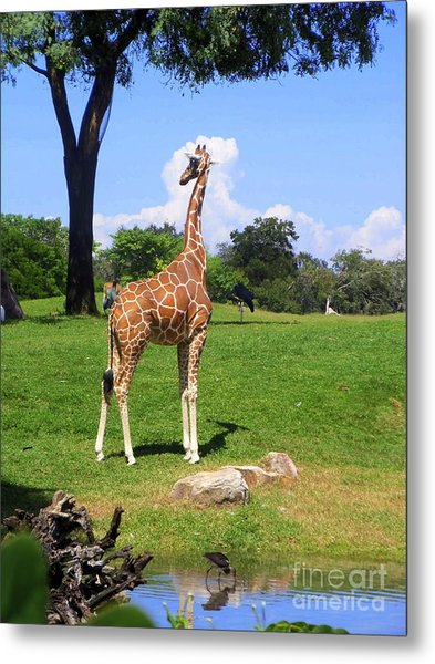 Giraffe On A Spring Day Metal Print
