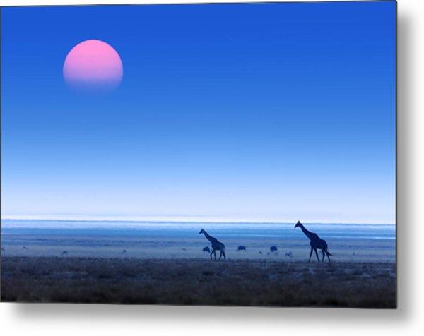 Giraffes On Salt Pans Of Etosha Metal Print