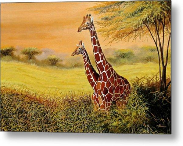 Giraffes Watching Metal Print