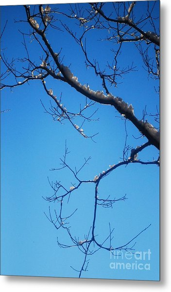 Glimmering Branches Metal Print by Susan Hernandez