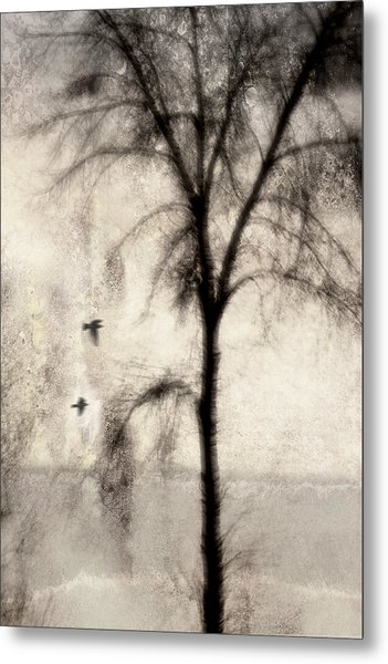 Glimpse Of A Coastal Pine Metal Print
