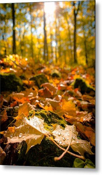 Glistening Autumn Dew Metal Print