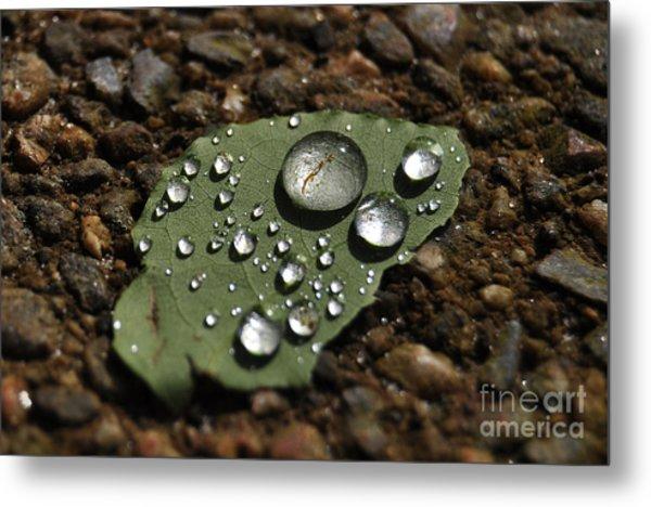 Glistening Raindrops Metal Print