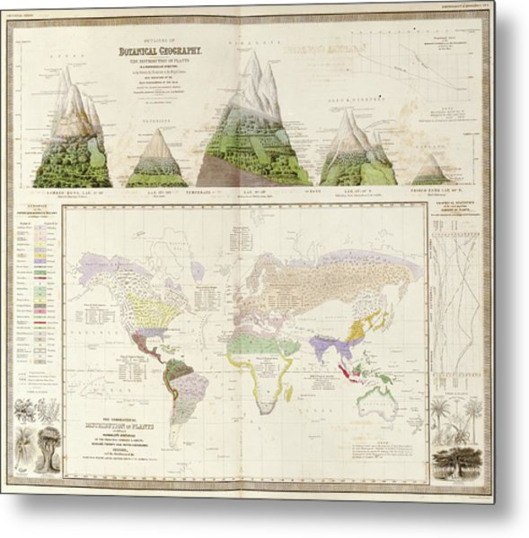 Global Botanical Geography Metal Print