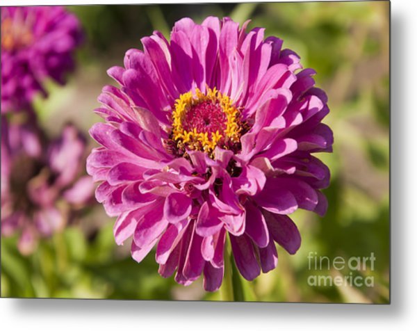 Glorious Flower Metal Print