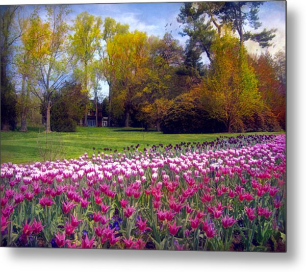 Glory Of Tulips Metal Print