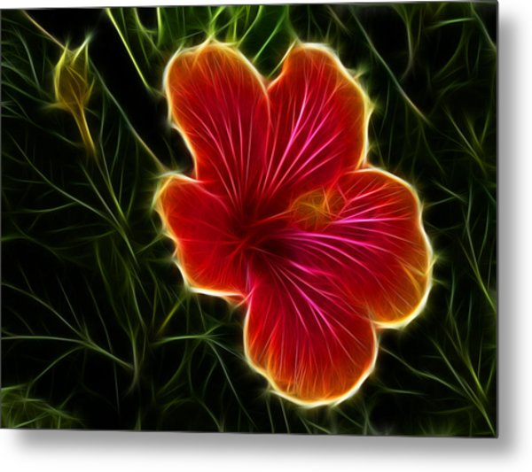 Glowing Hibiscus Metal Print