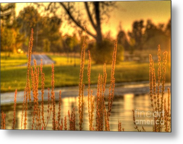 Glowing Plants In A Pond Metal Print