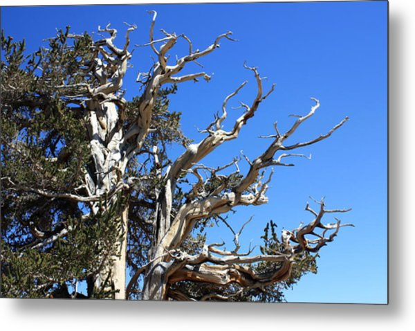 Gnarly Branches Metal Print