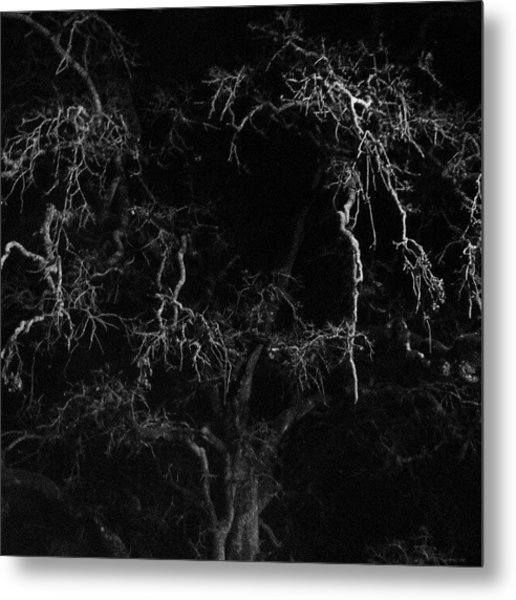 Gnarly Night Oak Metal Print