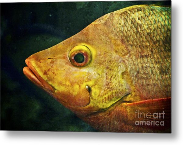 Go Fish Metal Print by Pam Vick